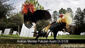 Arahan Menilai Pukulan Ayam Di S128