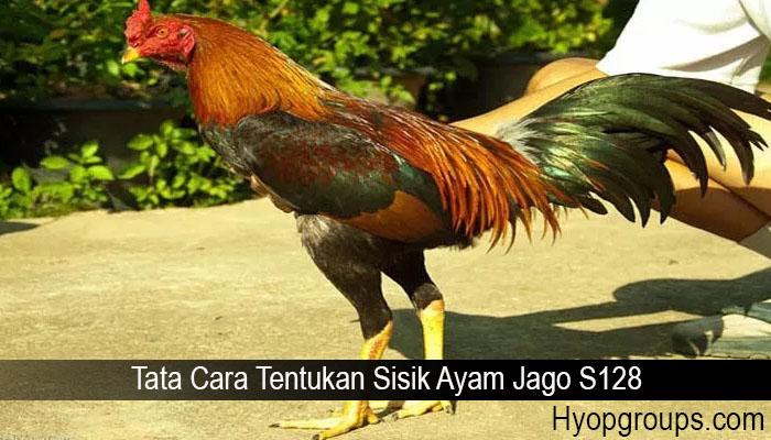 Tata Cara Tentukan Sisik Ayam Jago S128