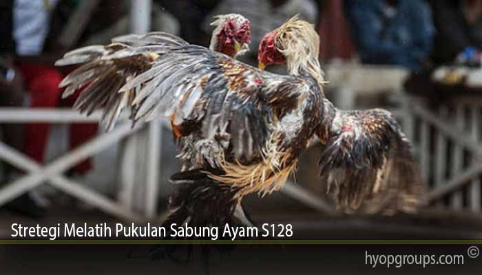Stretegi Melatih Pukulan Sabung Ayam S128